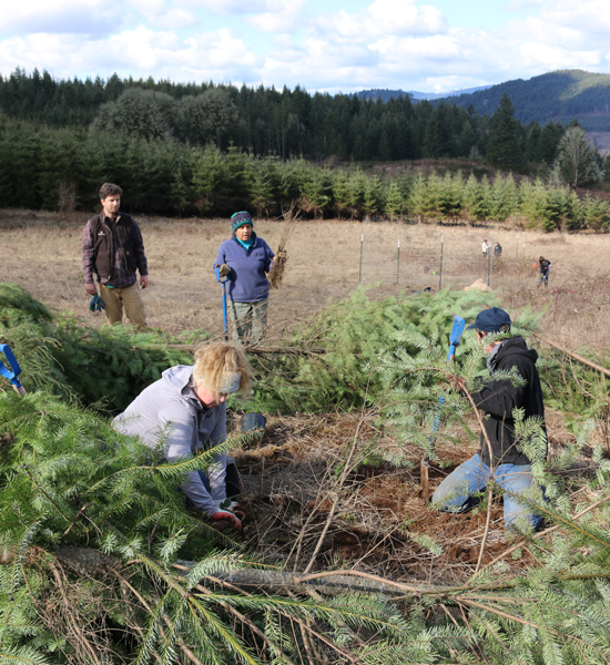 Oregon Oak Savannah Tree Planting
