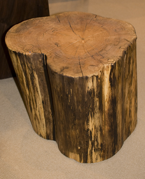 Fresh On The Floor Maple Tree Stumps The Joinery